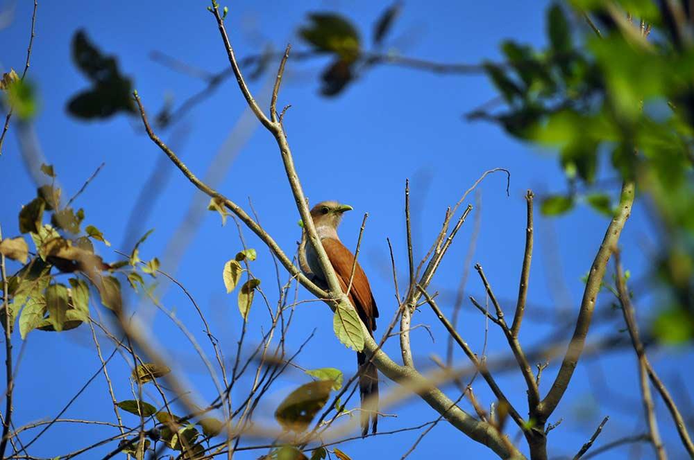 birding-lc