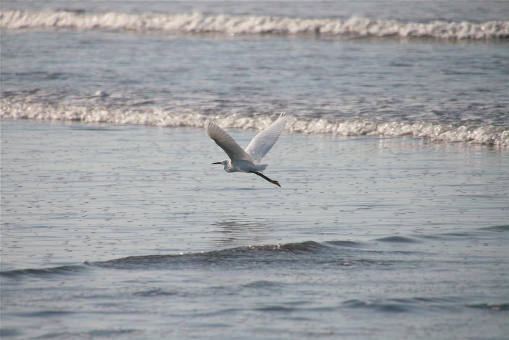 bird-sea-conservation