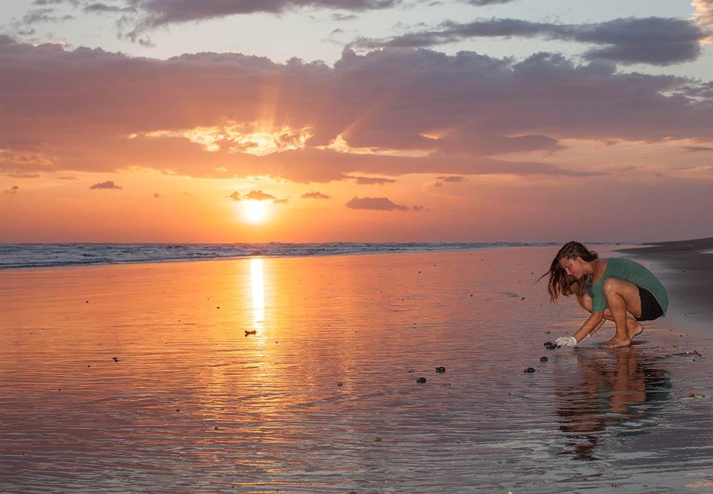 misc-turtles-sunset